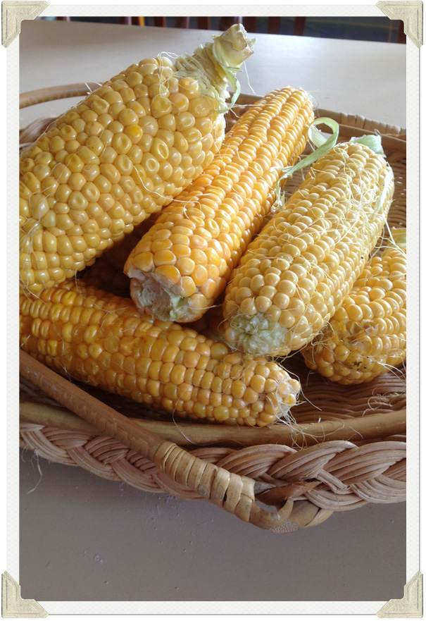 corn cob photo
