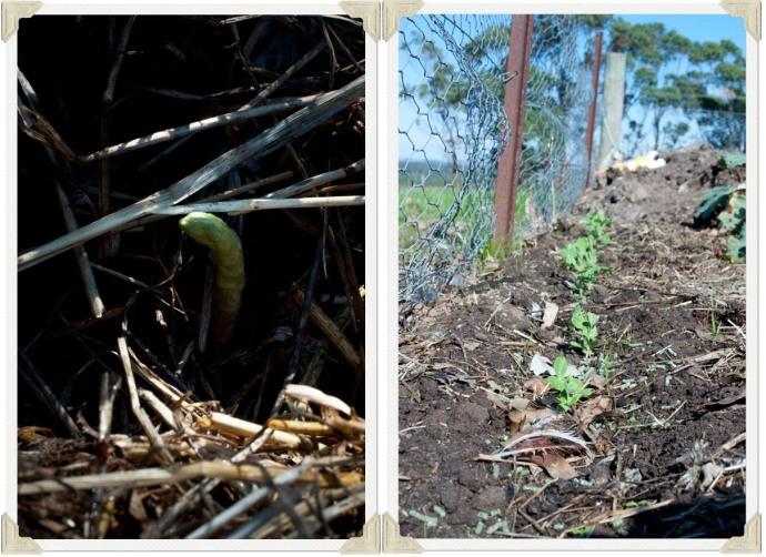 asparagus and peas photo