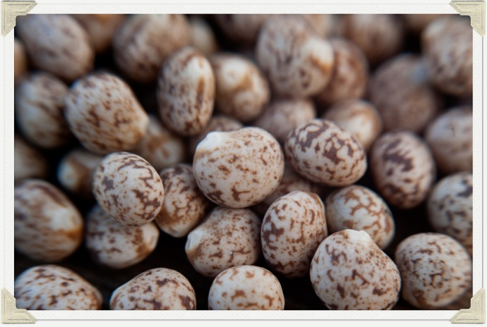 Sowing Lupins 02